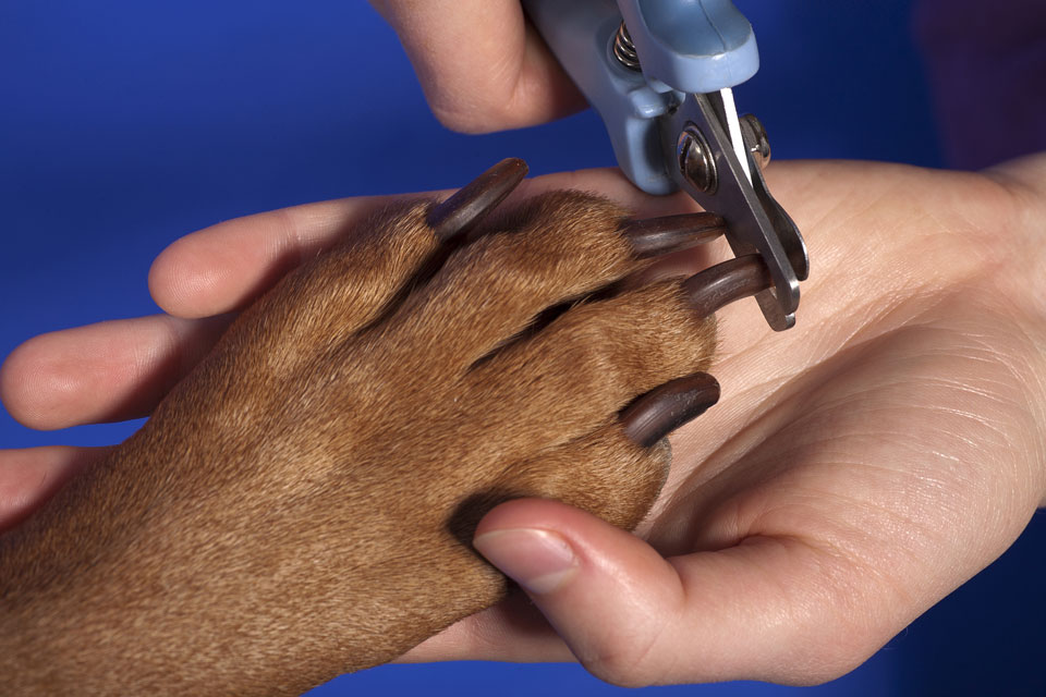 dog getting nails clipped